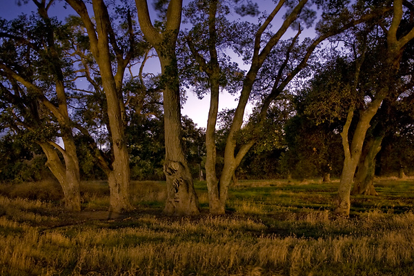 Trees at Coyote Hills.    Shot in the dark of night, lit from street lights.