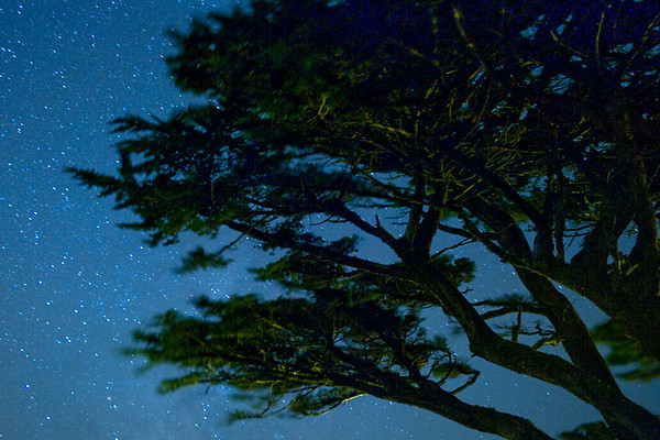 Starry TreesWind swept trees on a windy night, Point Reyes Lighthouse.